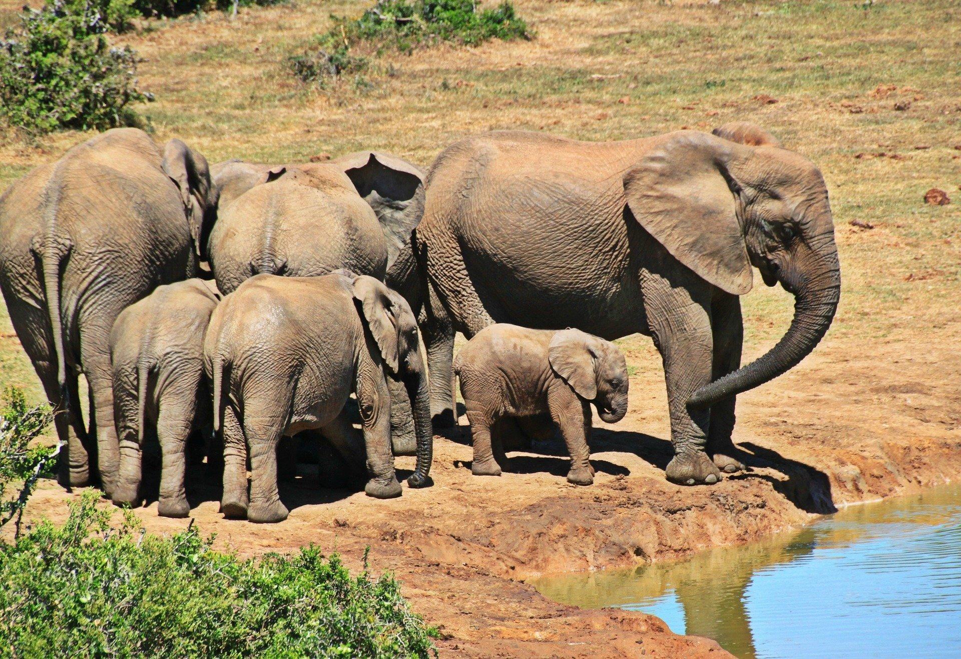 elephant-10925081920-1584026491.jpg